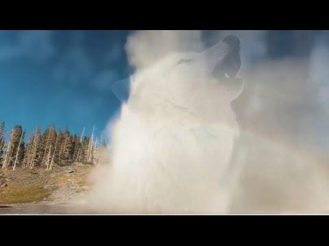 Cómo los lobos cambian ríos